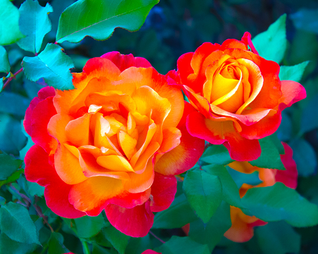 A Rose By Any Other Name . . . The Zeitgeist Of Writing Style