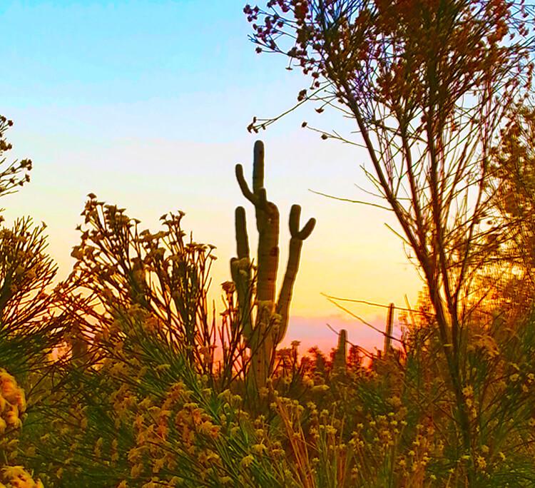 Saguaro Hunting by Michael Allan Scott, circa 2013