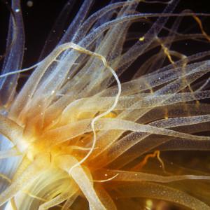 Anemone with macro lens
